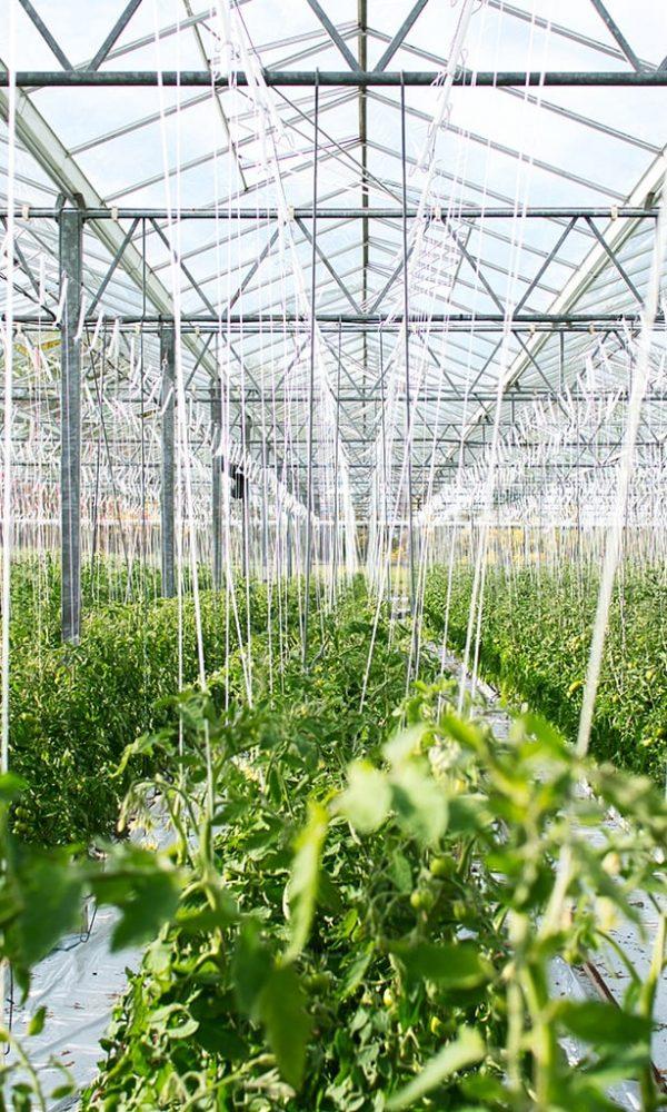 InterAtlas-greenhouse